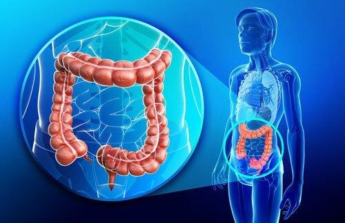 Articulo intestino trebolondinas